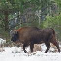 letošní zima v přírodě (7)