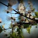 Mé milované jaro...♥III.