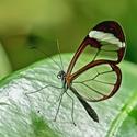 Tropický motýl,Fata Morgána ,Praha