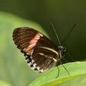 Motýl....