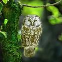 obrázky z Bavorského lesa (7)