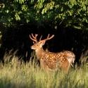 letošní léto v přírodě (1)