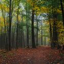Les pod Zelenou horou