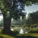 Ráno u řeky Dyje