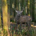 v podzimním lese (2)