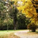 U zlatého stromu