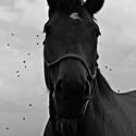 when horses crying