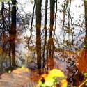 Odraz v podzimním rybníku..