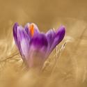 keď kvitne jar