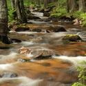 Svěží potok
