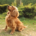 Náš pes Monty