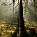 Keď sa prebúdza les II