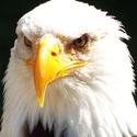 Pohled orla
