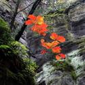podzim ve skalách