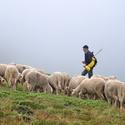 Makedonský pastýř vol2, barevná verze