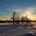 Zimní stromy