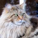 Kočičák z Turnerky