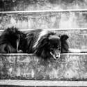 Pes na schodech