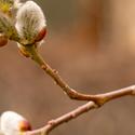 Jarní rozkvět