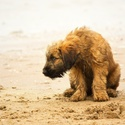 Puppy on the beach..