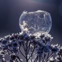 V ledovém království