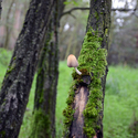 Symbióza v lese