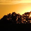 ..Slunce ve stromu..