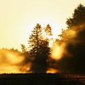 Podzimní mlžné ráno