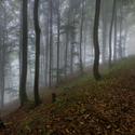 V bukovém lese