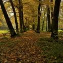 ...podzimní romance...