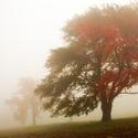 Mlha.