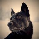 Zimní procházka s Hankem po Vysočině