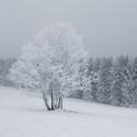 Bílá zima v Krušných horách