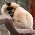 Opice v zimě