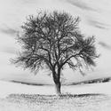 Strom v poli