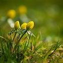 Jarní (talovín)