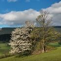 Jaro pod Kralickým Sněžníkem