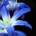 Modré jaro