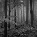 Jesenické lesy I.
