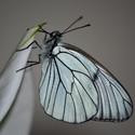 Křídla motylí