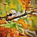 Podzimní čas