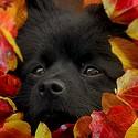Černá a podzim