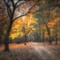 Podzim v parku II