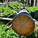 Dřevo v2