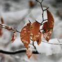 Podzim, zima.