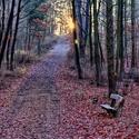 Svítání v Krčském lese