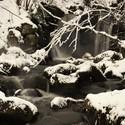 Lesní potok.