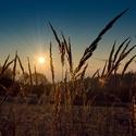 Svitem pohlazená tráva