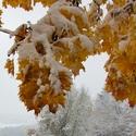 Brzká zima