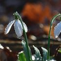 Jarní Poodří